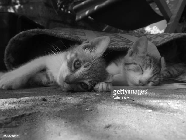 Sweety kittens black and white