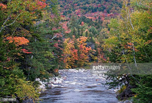 swift river in autumn, rocky gorge scenic area, white mountains national forest, new hampshire, usa - swift river stock photos and pictures