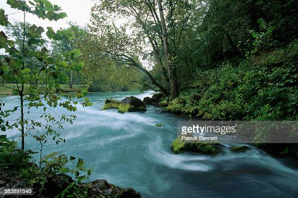 swift river lined with trees - swift river stock photos and pictures