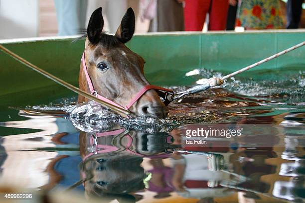 Swim therapy of a horse on July 03 2015 in Diessen am Ammersee Germany