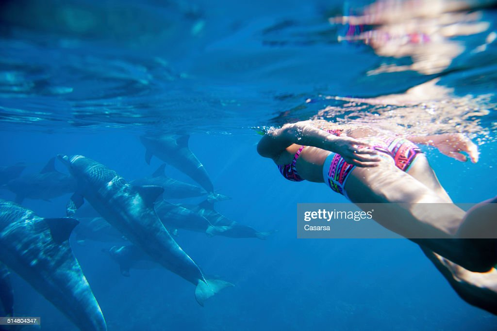 Swiming in the Indian ocean with dolphins : Stock Photo