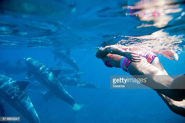 swiming in the indian ocean with dolphins - dolphin stock pictures, royalty-free photos & images