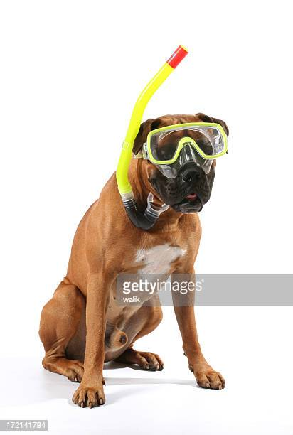 swimmer - dog mask stock pictures, royalty-free photos & images
