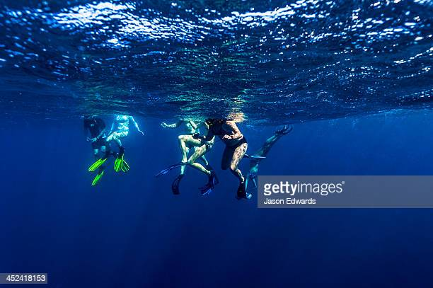 Swimmers bobbing and snorkeling on the surface of the open ocean.
