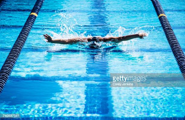 swimmers doing butterfly stroke in lane - バタフライ ストックフォトと画像
