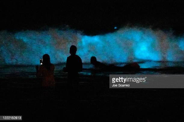 Swimmers take pictures in front of a bioluminescent wave at the San Clemente Pier on April 30 2020 in San Clemente California