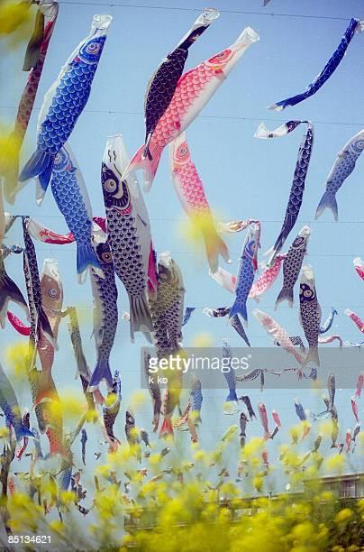 swimming in the sky - 鯉のぼり ストックフォトと画像