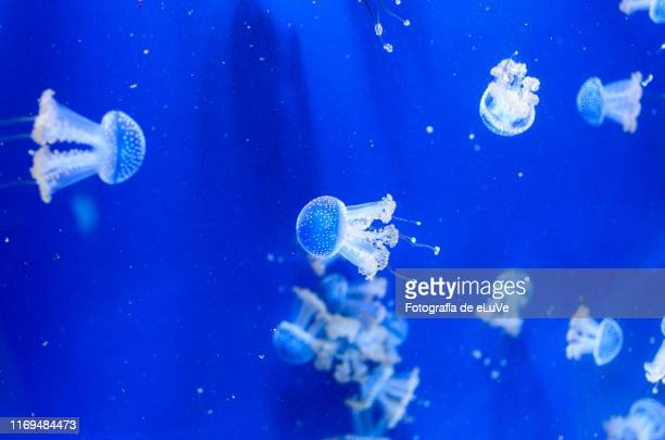 swimming jellyfish - phosphorescence stock pictures, royalty-free photos & images