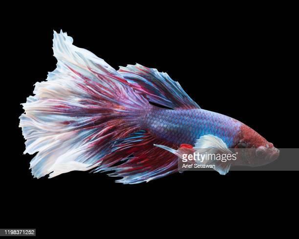 swimming - 熱帯魚 ストックフォトと画像