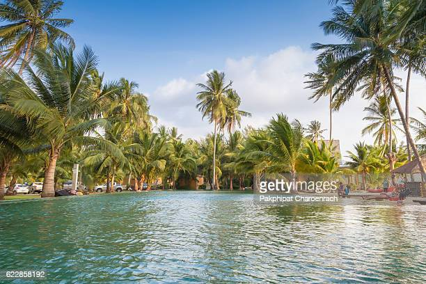 Swimming pool and palm tree near the beach.