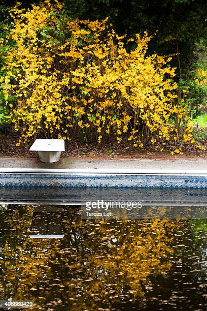 Swimming pool in Spring