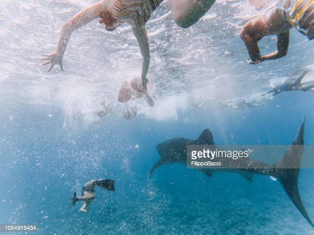 swimming together in the ocean - whale shark stock pictures, royalty-free photos & images