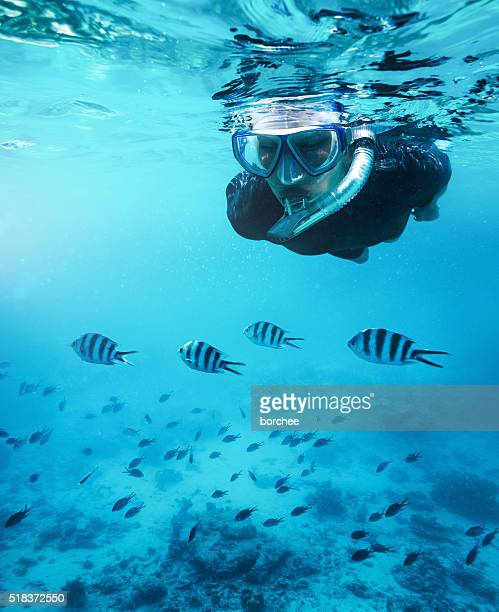 swimming with fishes - zanzibar island stock photos and pictures