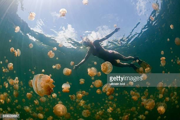 Swimming with Jellyfishes Mastigias papua etpisonii Jellyfish Lake Micronesia Palau