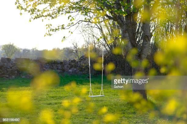 a swing hanging from a tree in the spring - schommelen bungelen stockfoto's en -beelden