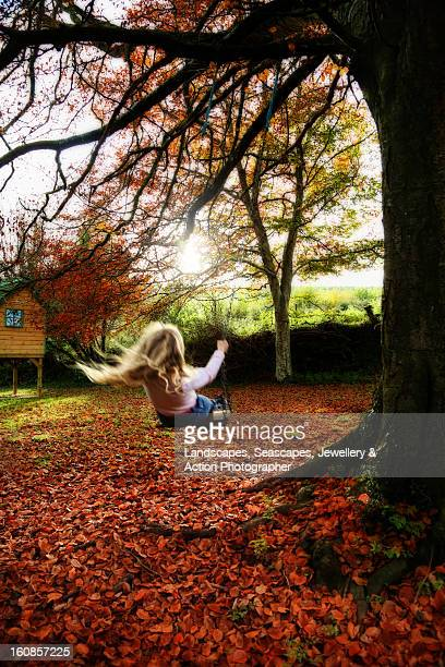 swing low - beech tree stock pictures, royalty-free photos & images