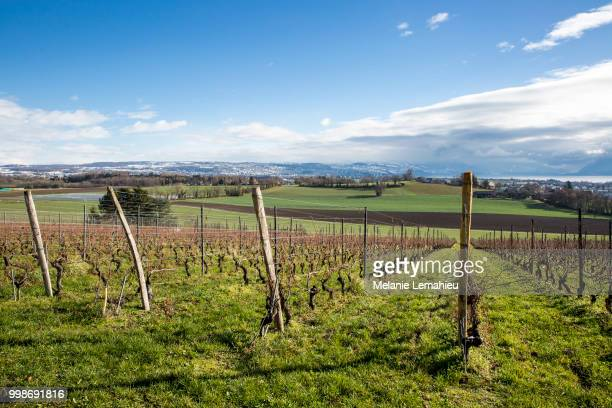 Swiss autumn landscape with vineyards, green field and Leman lake and mountain in the background
