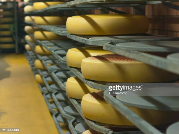 Swiss Cheese Production