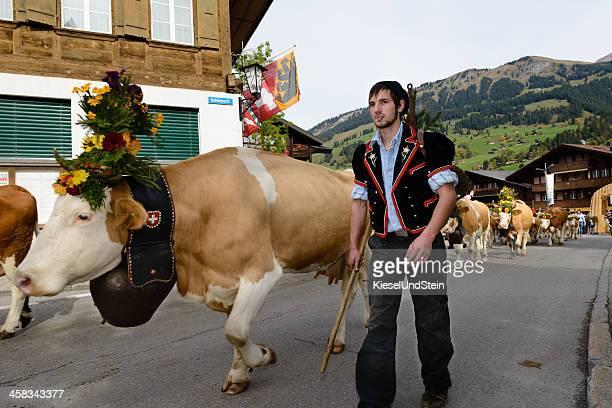 schweizer kühe nach alp-herkunft - almabtrieb stock-fotos und bilder