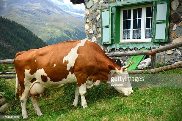 Lait de Vache suisse