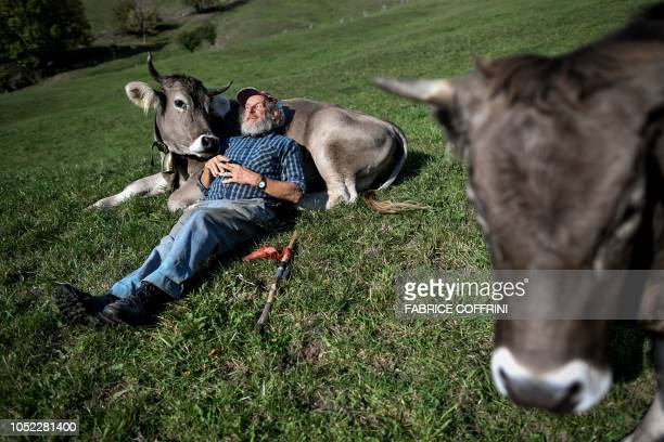 TOPSHOT Swiss farmer farmer Armin Capaul poses with his cows ahead of the nationwide vote on his initiative on cow horns on October 16 2018 above...
