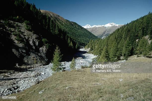 swiss river valley and pine forest - kanton graubünden stock-fotos und bilder