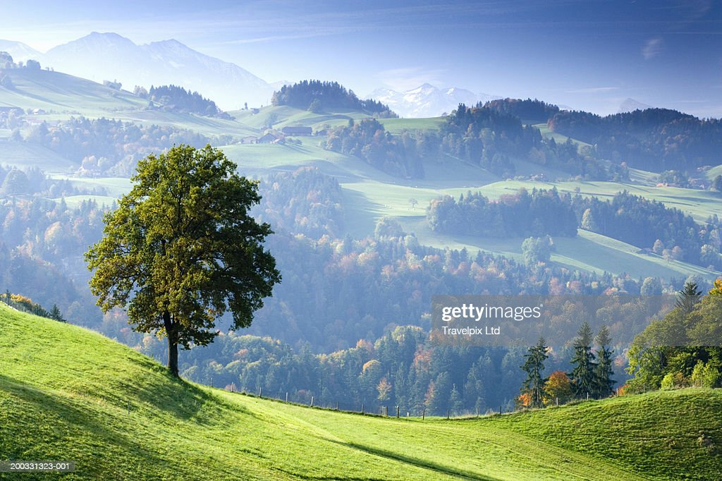 Switzerland, Bernese Oberland, tree on hillside near Thun : ストックフォト