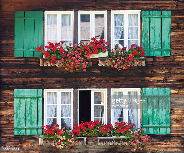 switzerland, bernese oberland, windows with flower boxes of farmhouse - geranium stock pictures, royalty-free photos & images