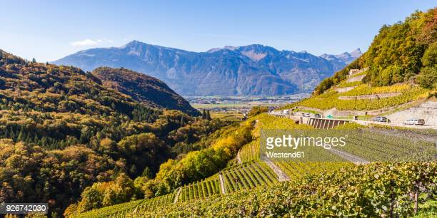 switzerland, canton vaud, aigle, vineyard - kanton waadt stock-fotos und bilder