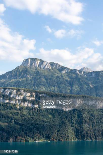 switzerland, gersau, schwyz, scenic view of high forested cliff in summer - schwyz stock pictures, royalty-free photos & images