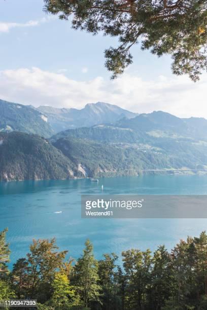 switzerland, gersau, schwyz, scenic view of lake lucerne in summer - schwyz stock pictures, royalty-free photos & images