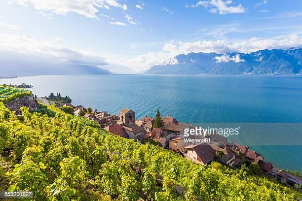 switzerland, lavaux, lake geneva, wine-growing area saint-saphorin - meer van genève stockfoto's en -beelden