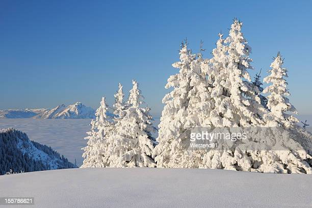 Switzerland, Lucerne, View of snow covered trees, Mount Pilatus in background at Canton Schwyz