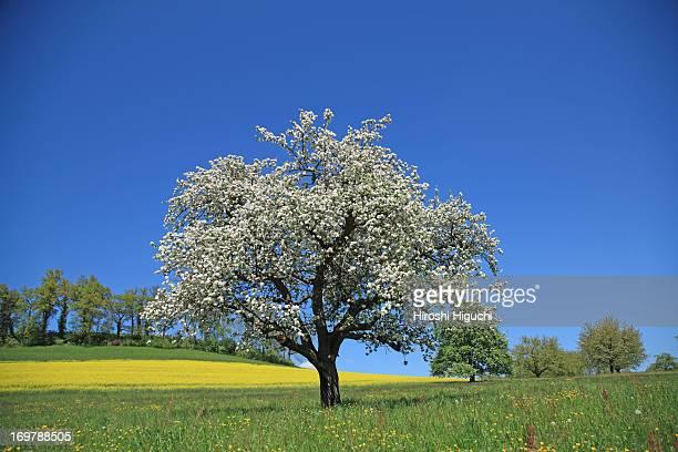 Switzerland, Spring Landscape