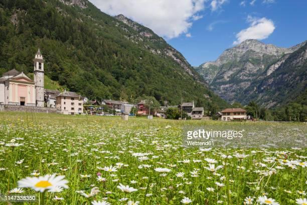 switzerland, ticino, sonogno village, alpine meadow - ticino canton stock pictures, royalty-free photos & images