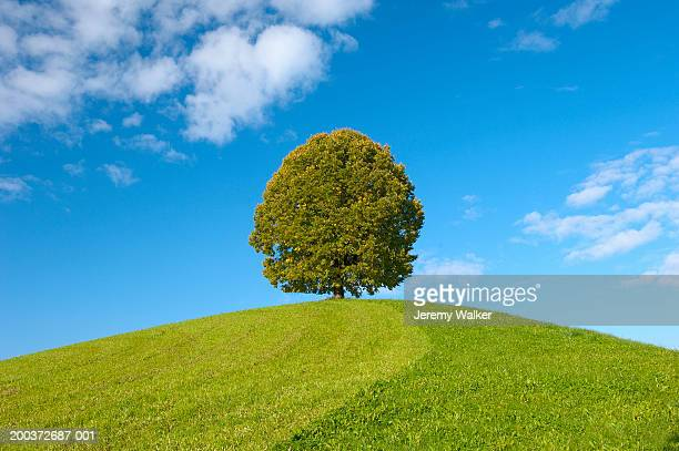 Switzerland, tree on hill