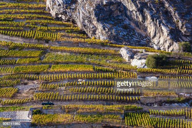 switzerland, valais, ardon, vineyards at hillside - rhone stock pictures, royalty-free photos & images