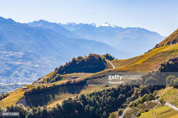 switzerland, valais, montagnon, vineyards - rhone stock pictures, royalty-free photos & images