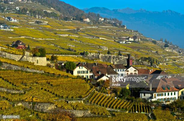 village of Rivaz and vines of Lavaux in the Canton of Vaud The Rivaz vineyard terraces are registered as Unesco World Heritage Sites