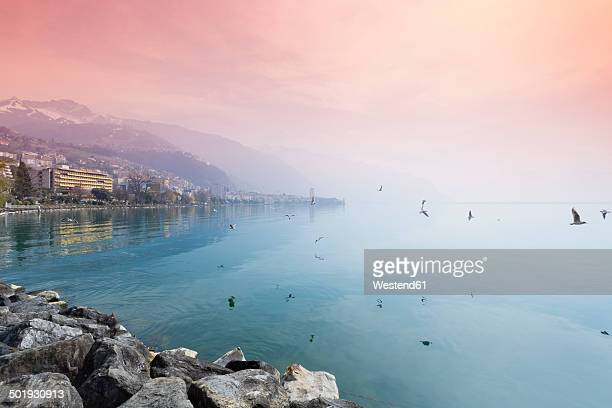 switzerland, waadt, montreux, lake geneva in the evening - montreux stock pictures, royalty-free photos & images