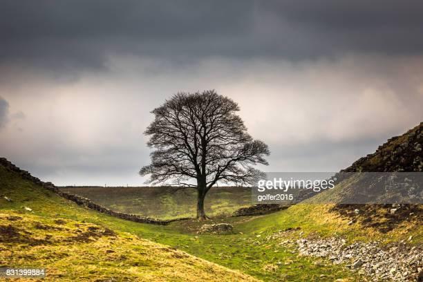Sycamore Gap - Hadrians Wall - Northumberland
