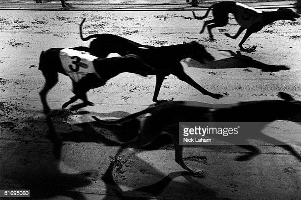 Sydney Greyhound Racing