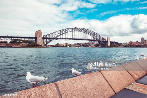 sydney harbor bridge, australia - sydney harbour bridge stock pictures, royalty-free photos & images