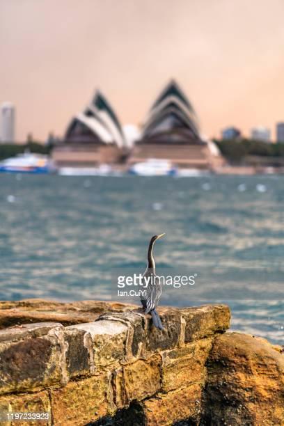 sydney opera house, sydney, australia (sunset) - sydney ストックフォトと画像