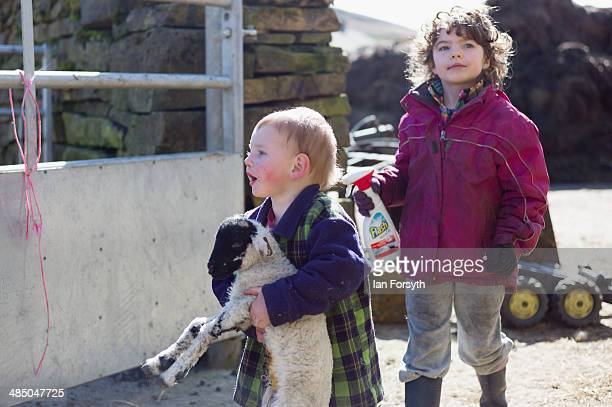 Sydney Owen and his sister Edith help out with new born lambs at Ravenseat the farm of the Yorkshire Shepherdess Amanda Owen on April 15 2014 near...