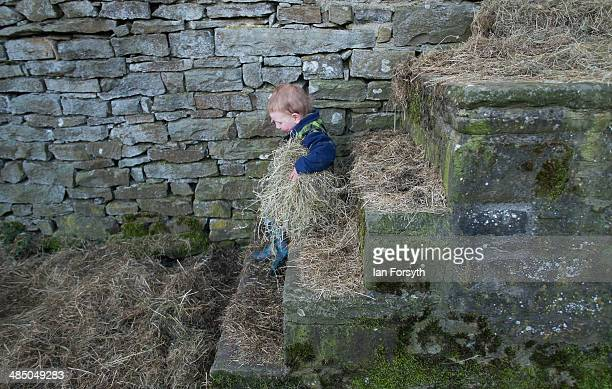 Sydney Owen carries fresh straw as he cleans out the chickens at Ravenseat the farm belonging to the Yorkshire Shepherdess Amanda Owen on April 15...