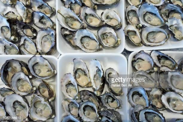 sydney rock oysters - rafael ben ari bildbanksfoton och bilder