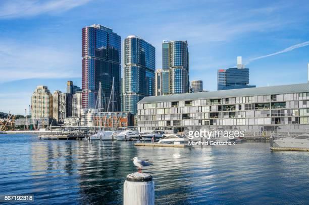 sydney wharf and international towers - einzelnes tier stock-fotos und bilder