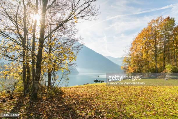 sylvenstein lake in autumn. bad tölz-wolfratshausen district, bavaria, germany. - riva del lago foto e immagini stock