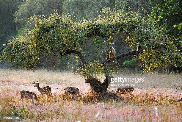 symbiosis - bandhavgarh national park stock pictures, royalty-free photos & images
